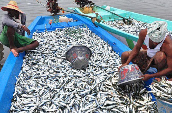 آئس لینڈ سے ماہی پروری کے فروغ کیلئے معاہدہ کو منظوری