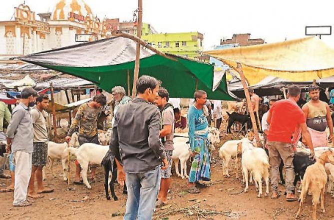 Patna Raja Bazaar Goat Market .Picture: Inquilab