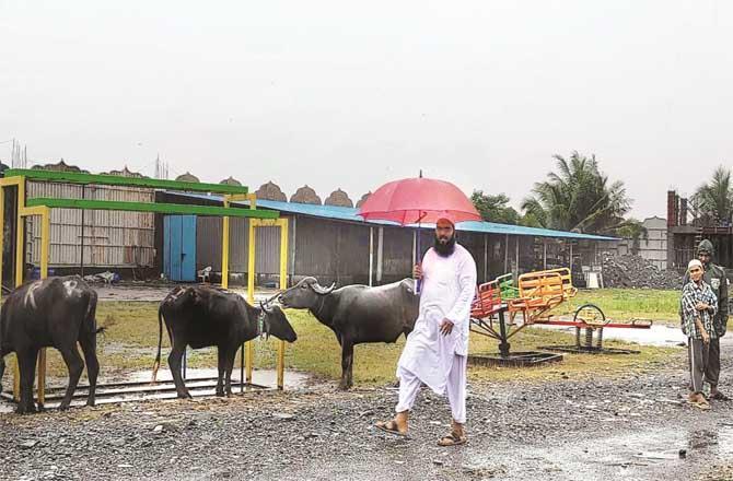 Al-Nadi Al-Falah Madrassa, a temporary slaughterhouse has been set up at Shimla Park.Picture:Inquilab