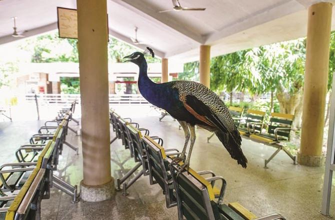 Lucknow: A view of a zoo on the last day of the Corona Curfew..Picture:PTI